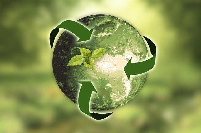 Wyniki szkolnego konkursu ekologicznego
